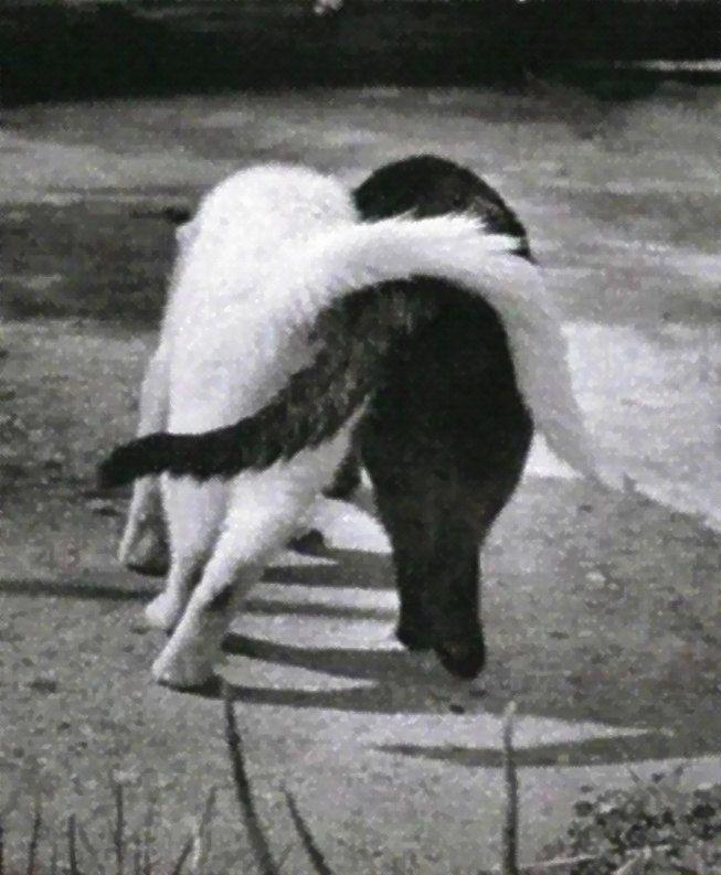 Mejores 35 imágenes de Leopard❤ en Pinterest | Animales, Animales ...