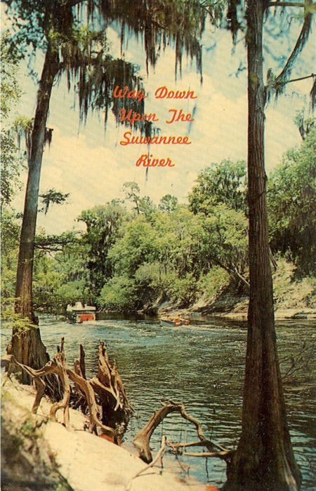 Old Suwannee River Florida. So many memories. I have to go back. Missing this too much