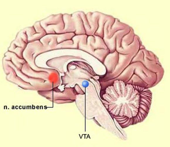 This image shows the location of the ventral tegmental area in the brain.