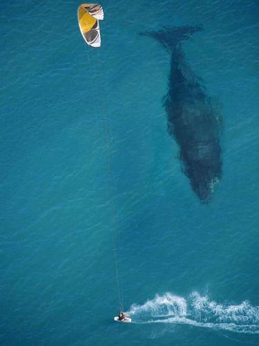 クジラと遭遇した「本当に大きい」と実感できる写真