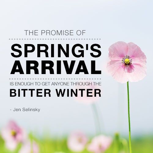 76 Best Images About Spring Into Spring On Pinterest
