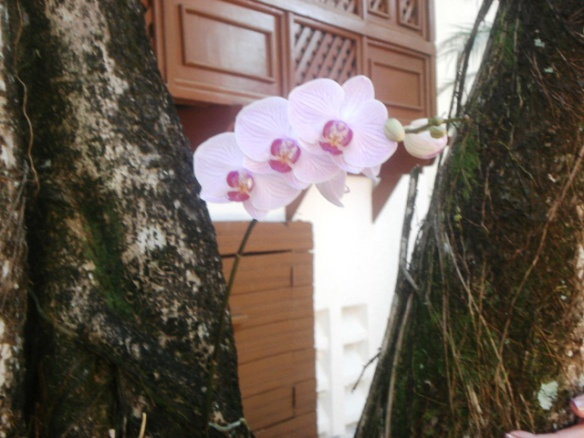 orchids in a tree  Dominican Republic Resort