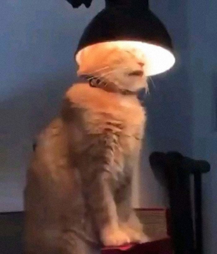 What S Wrong With My Cat Online Group Has Owners Posting Pics Of Their Malfunctioning Cats And Here Are 50 Of The Funniest Ones Cat Online Cats Cute Funny Animals