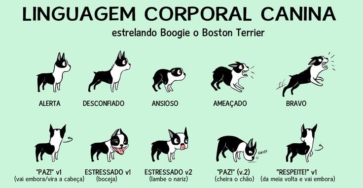 sinais de apaziguamento canino - Pesquisa Google