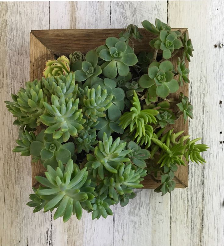 Small Vertical Garden by Mulbury on Etsy