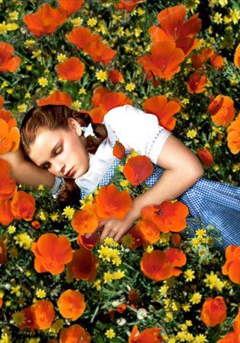 Dorothy in the poppies via Nathalie De Francisci