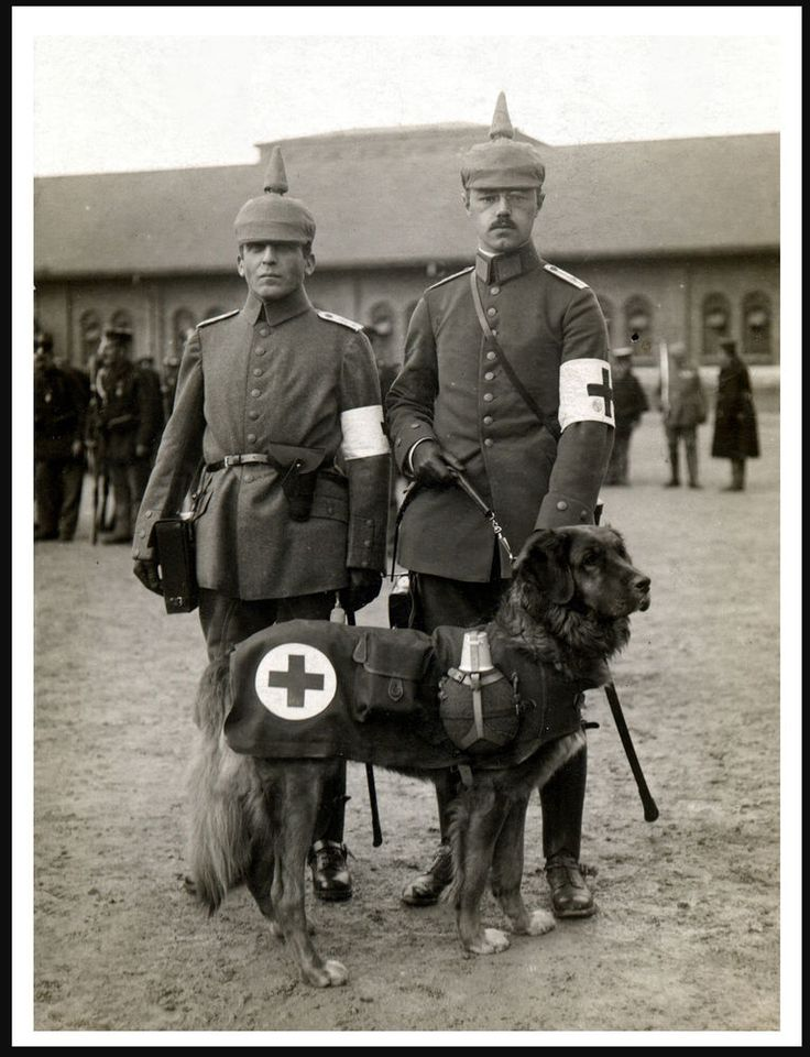 LEONBERGER GERMAN RED CROSS TEAM AND DOG GREAT VINTAGE IMAGE DOG PRINT POSTER
