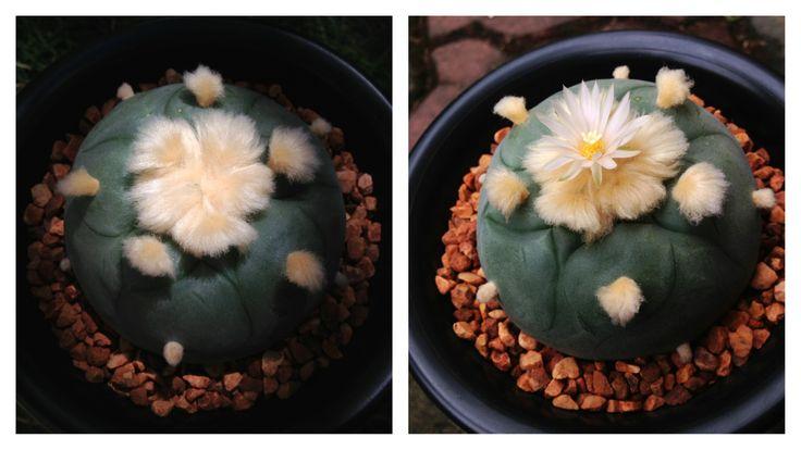 Goo:D :Day & Goo:D Flower :)