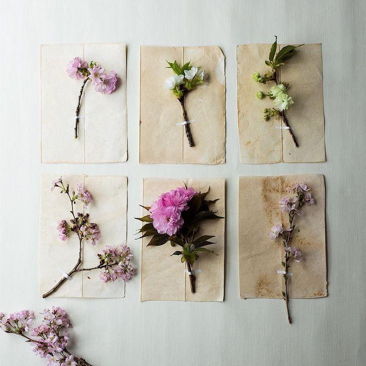 Cherryblossom collection#cherryblossom #sakura桜、色々。  #Regram via @nonihana_