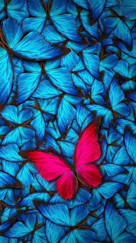 iPhone Wallpaper Butterfly wallpaper, Blue butterfly