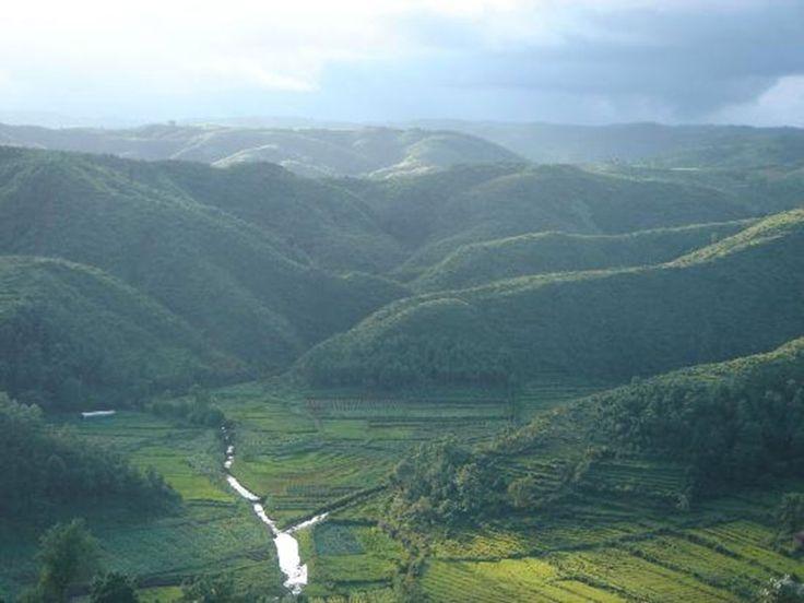 Flora and Fauna of Meghalaya, India @ Sanctuariesindia.com