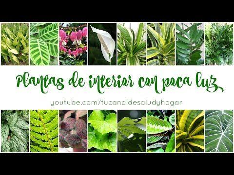 Plantas de interior con poca luz - YouTube