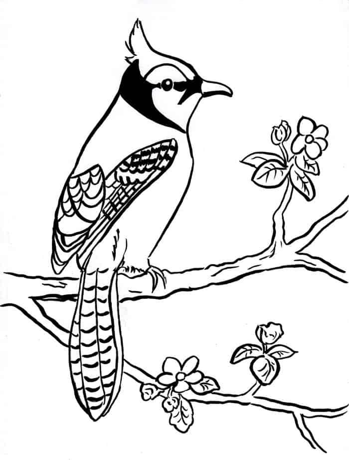Bird Coloring Pages Printable In 2020 Bird Coloring Pages Blue