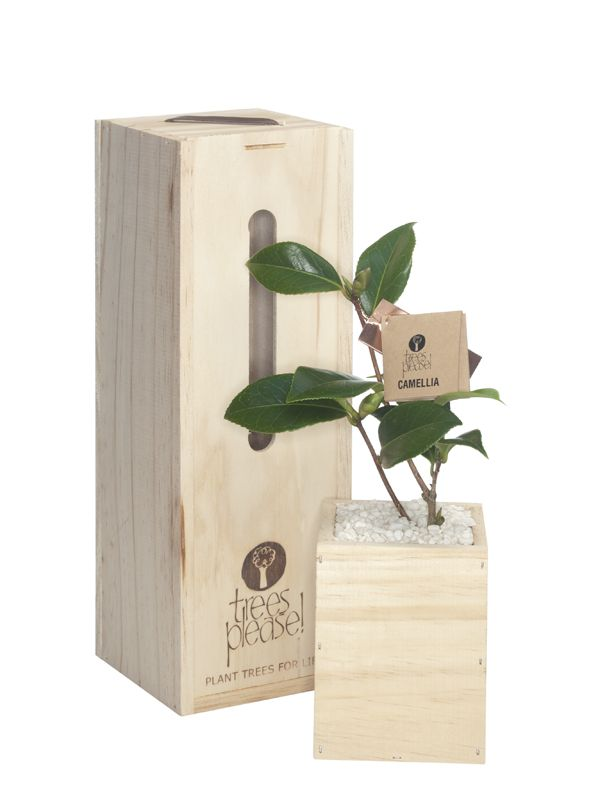 Perfect smaller gift boxes when you just want a little something .....