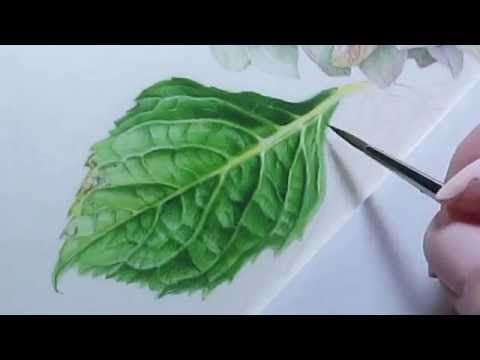 Watercolor Hydrangea Leaf - YouTube