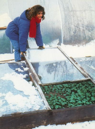 Gardening Tips from Eliot Coleman: How to Start Seedlings in a Cold Frame : Chelsea Green