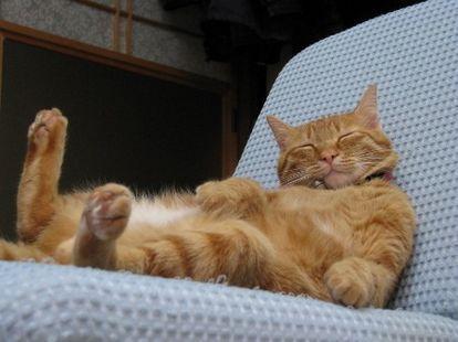 茶トラはほとんどがオスらしい。 天然系の猫さんです。 出典赤猫さんの性格 - 猫とツキの不思議な関係 ボーっとしている猫が多い、といわれます。横にいつもいてくれる、というような甘えん坊な猫さんです。赤猫さんは、根に持つ、ということもないので、一緒に暮らしやすい猫さんですね。猫を飼ったらめちゃくちゃ可愛がりたい・・という人に向いています。触ったり抱っこしたりするのがストレスになる猫さんもいますが、赤猫さんは、一般的にそういったスキンシップが大好きです。
