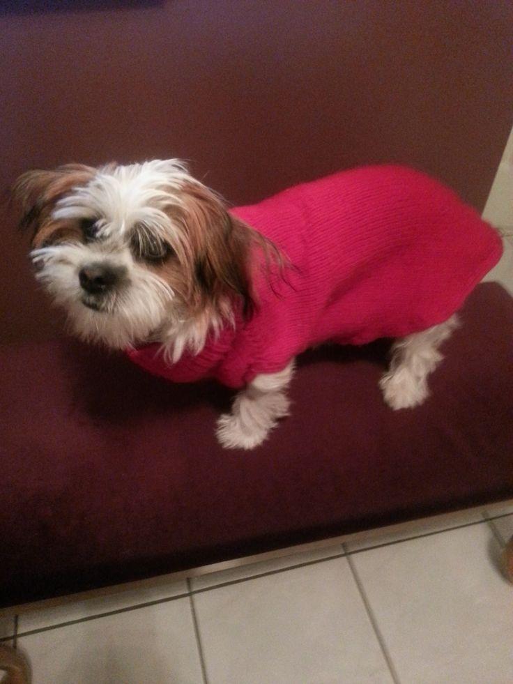 Benji's warn winter sweater from Nancy.