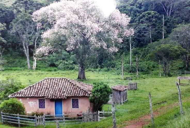 A florada dos Ipês Brancos   Conheça Minas