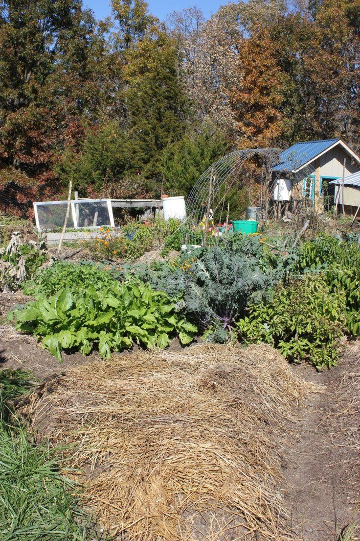 8 best preparing garden for winter images on pinterest - Prepare vegetable garden for winter ...