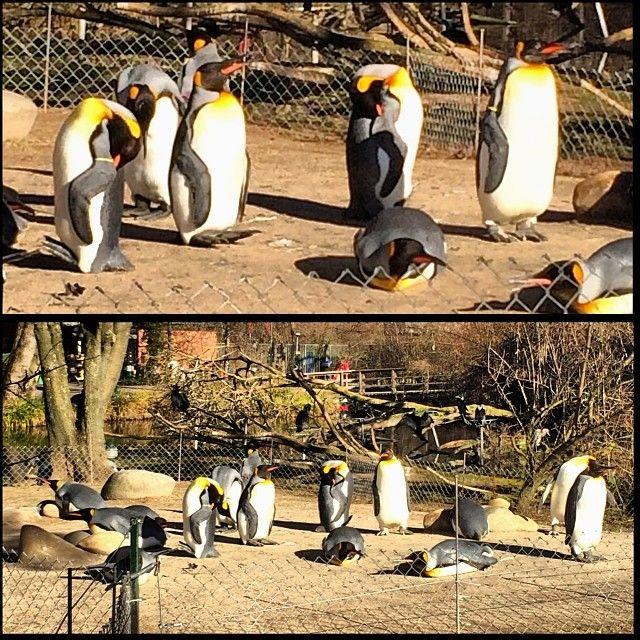 Basel Zoo itt: Basel, Basel-Stadt