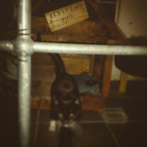 Resident evil #straycats