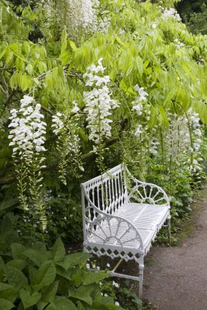 Repeating the white in your garden increases the interest-value of bench (Hidcote Manor Garden~English Gardens)