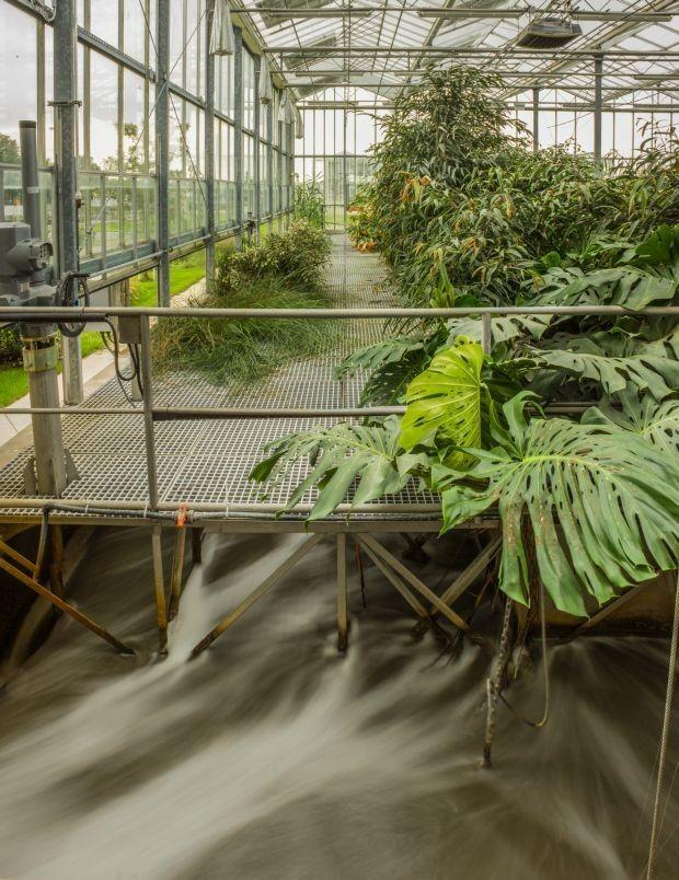 Greenwalkphotos 2014,  Makai Gábor: Élőgépes víztisztítómű, Dél-pesti Szennyvíztisztító