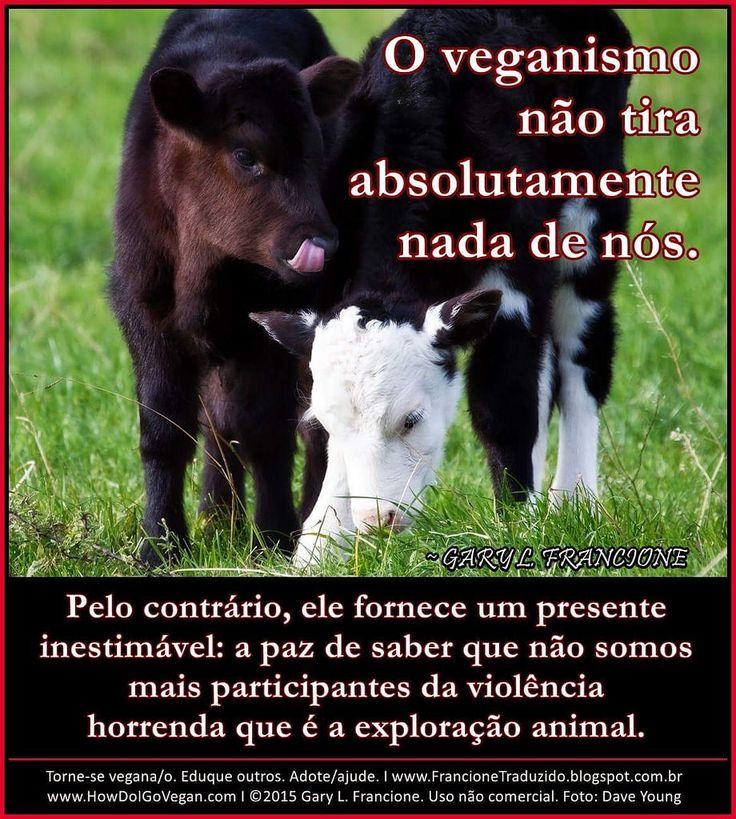 Argumentative essay help veganism