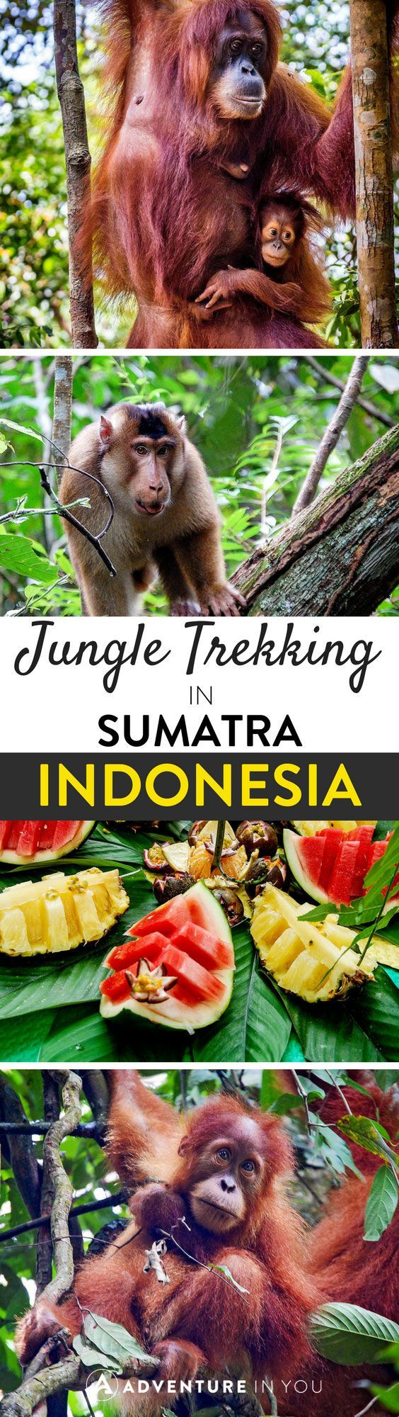 Trekking in Indonesia | Planning to head to Sumatra? Read up on our experience trekking with wild Orangutans