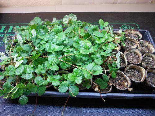 17 Best Images About Garden Plant Germination Equipment 400 x 300