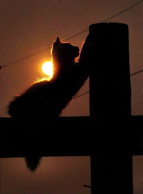 "Sunset * * "" A long day - and here's to a better tomorrows. Maybe de humans will stop der fightin' wif each other."""