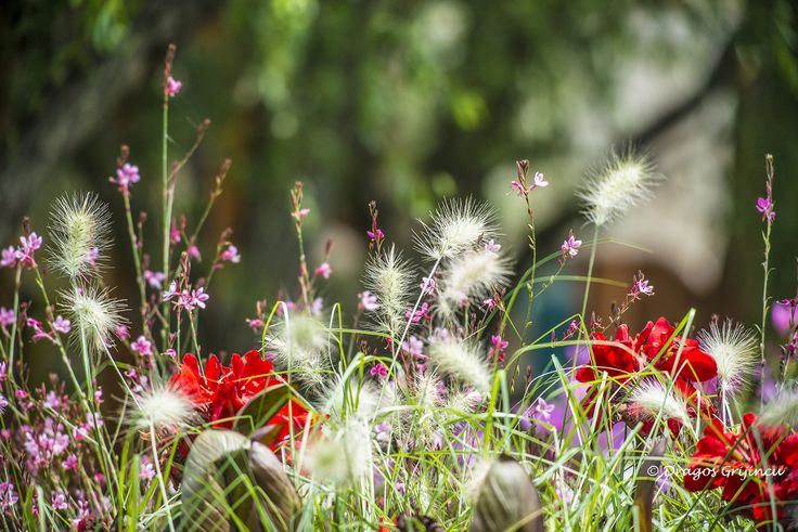 Florile de la Casa Comana