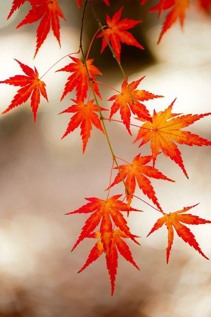 Memories of leaves by shinichiro* via Flickr