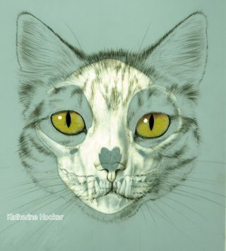 cat skull drawing - Google Search