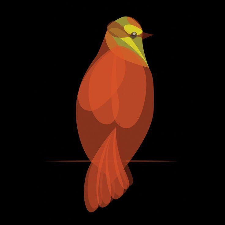 Fluid Animals: Sparrow || Ben the Illustrator || http://bentheillustrator.prosite.com