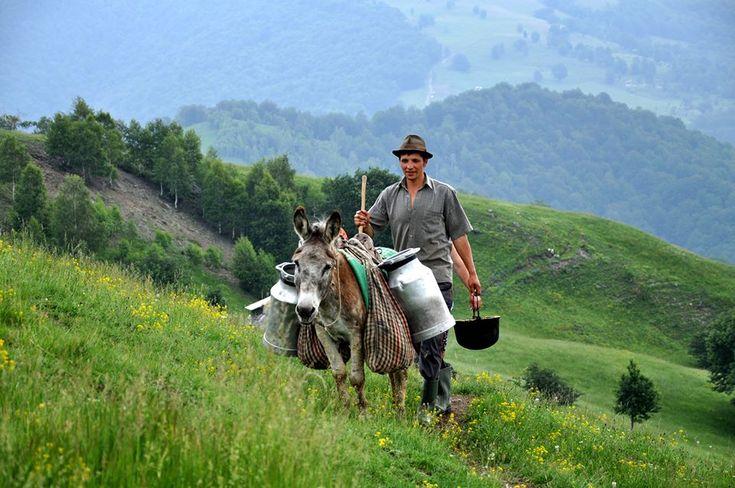 #RomaniaAutentica - la stana lui Gheorghe, ciobanul din Golcin | Airlines Travel