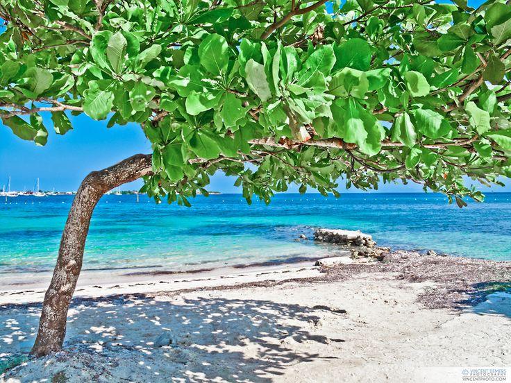Utila Island Honduras | Utila Island Honduras