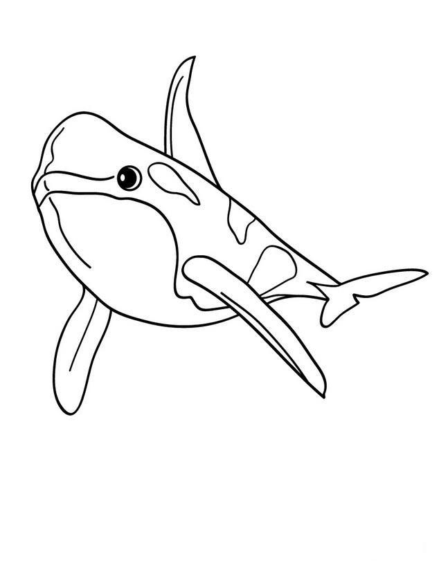 Dibujo Ballena Orca Orcas Ballenas Dibujo Paginas Para Colorear De Animales