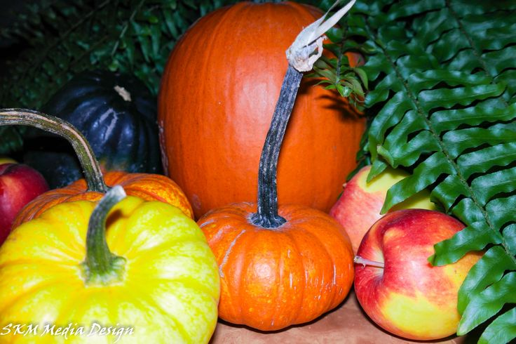 Harvest Time! #pumpkins #apples #halloween #scary #pumpkinpie #applepie #season #fall #winteriscomming #garden #Fresh #sweat #skmemediadesgin