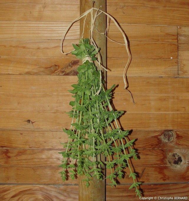 Cet article est consacré aux différentes méthodes utilisées pour faire sécher les plantes médicinales.