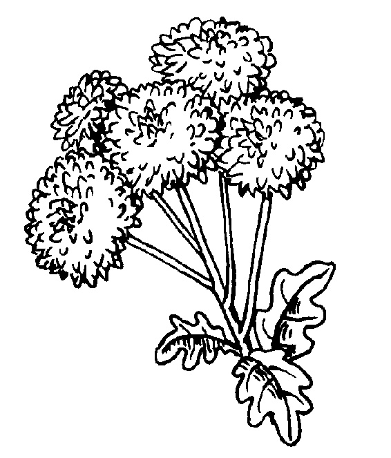 It's just a picture of Luscious Dandelion Coloring Page