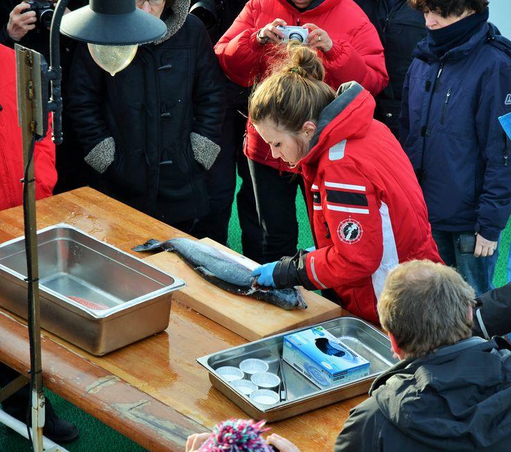 """Slik fileterer man laks ! """"Kurs"""" på akterdekket om bord på MS Lofoten mens vi seiler søretter Raftsundet. foto: TGJ"""