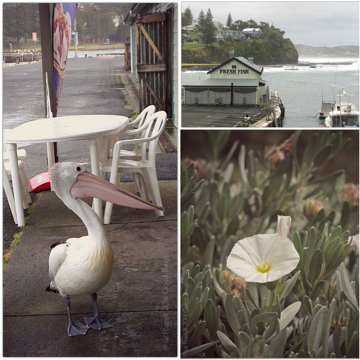 Love the pelican who met us every morning at the fish market, Kiama http://www.bizzylizzysgoodthings.com/2/post/2014/01/postcards-and-morsels-kiama-nsw.html