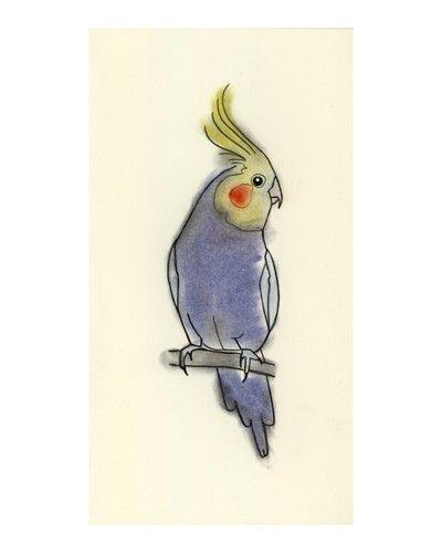Australian Bird Art Drawing - Little Cockatiel - 4 X 6 print