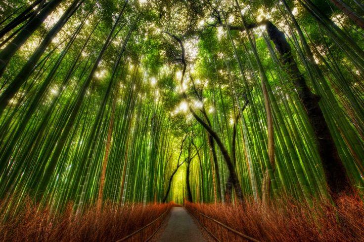 Sagano-Bamboo-Forest-Arashiyama