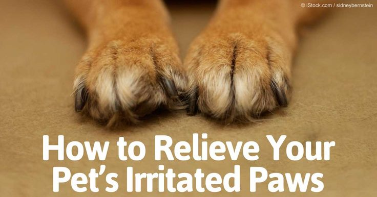 Paw irritation can be a sign of contamination. Learn how to relieve your pet's irritated paws with Dr. Becker's simple guidelines. http://healthypets.mercola.com/sites/healthypets/archive/2009/12/16/thirty-seconds-to-relieve-your-pets-itchy-paws.aspx