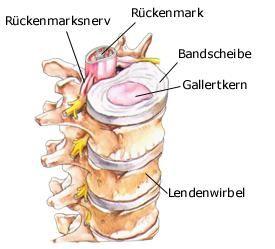 Bandscheiben | Anatomie - gesundheit.de