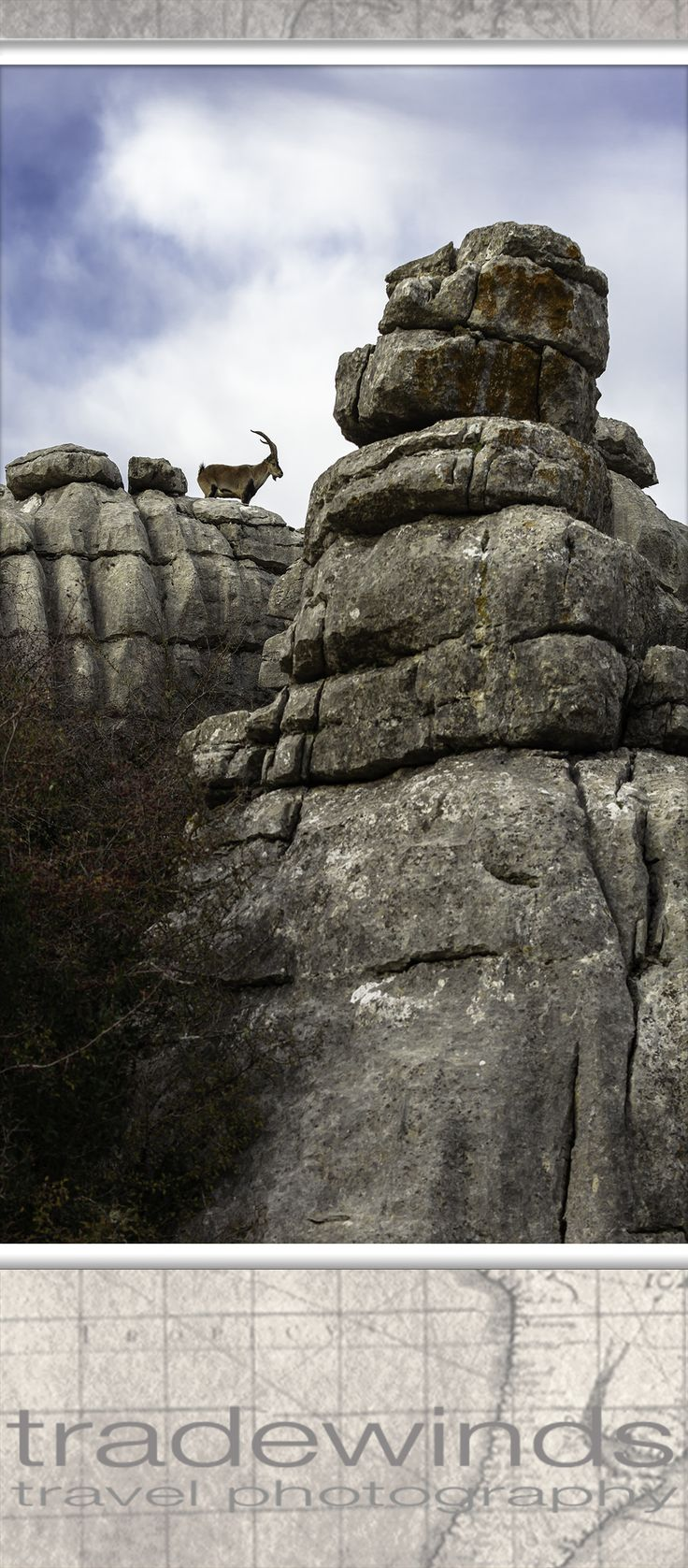 mountain goat at el torcal national park in andalusia, spain