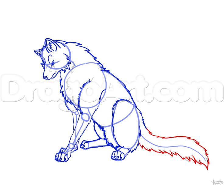 how to draw a wolf sitting step 5